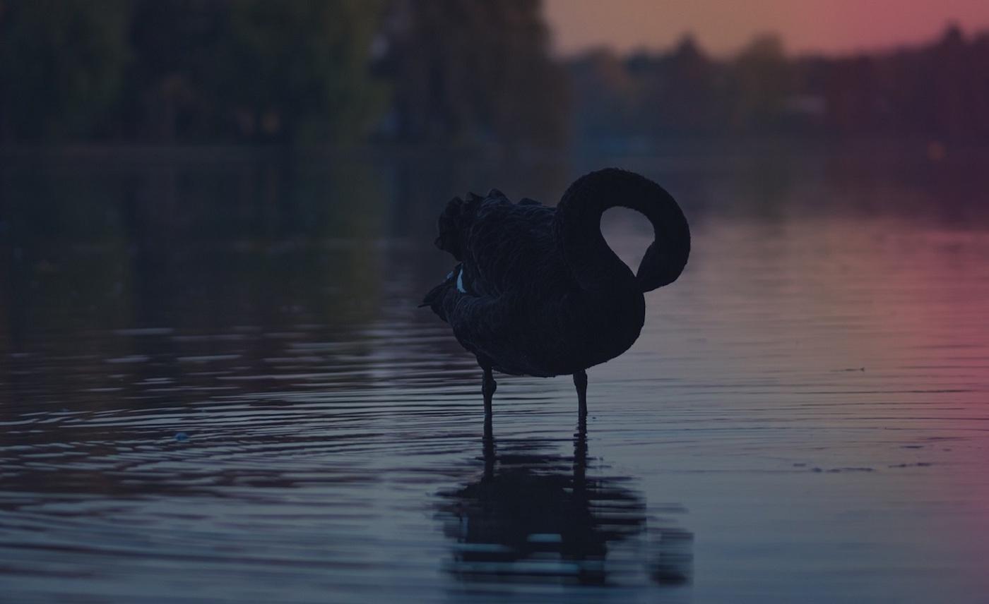 black swan psychological analysis